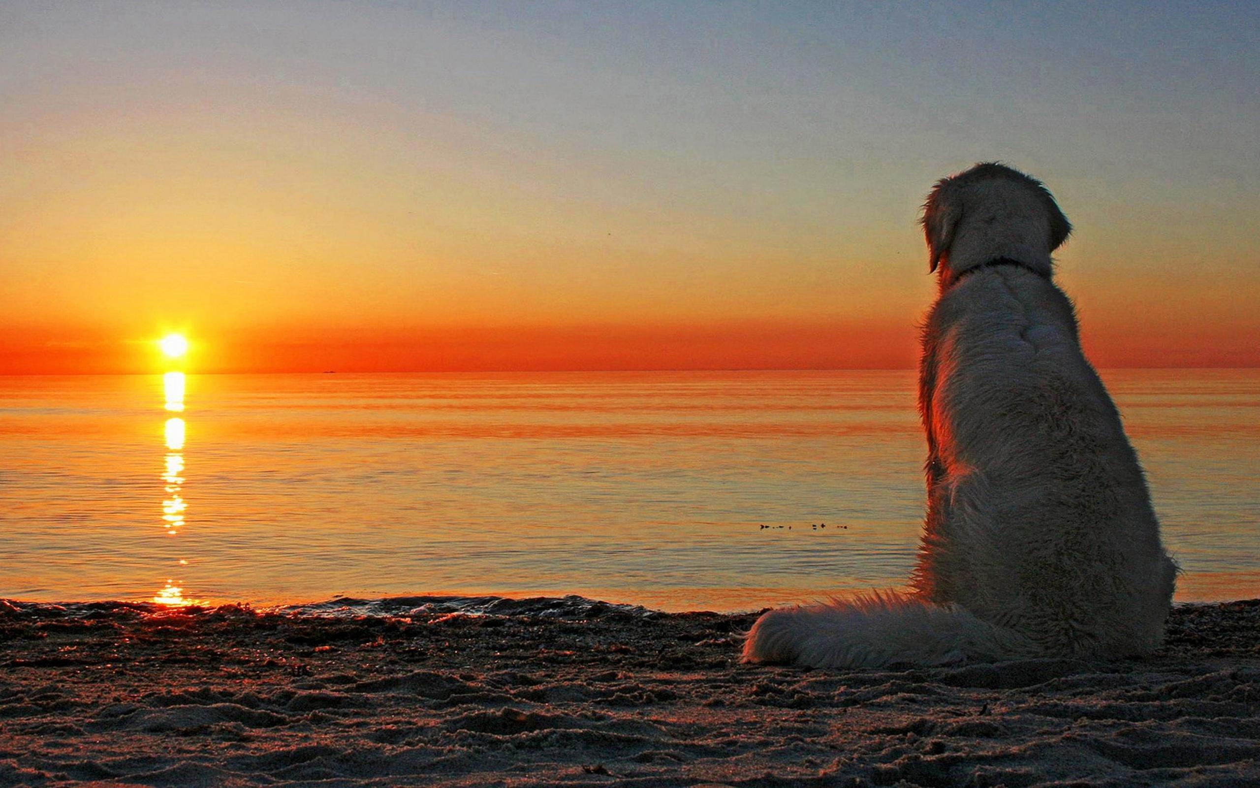 Собака на фоне заката  № 2038700  скачать