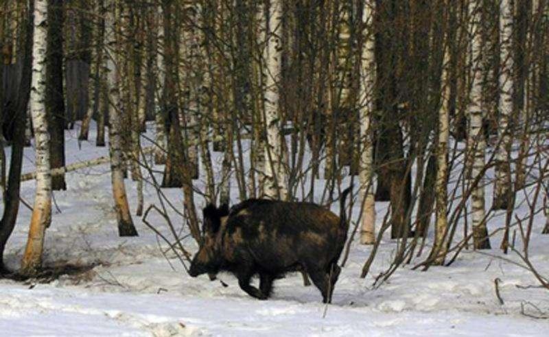 Охота в Кирове и Кировской области 2015