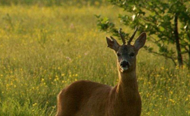 Охота в Курганской области 2015