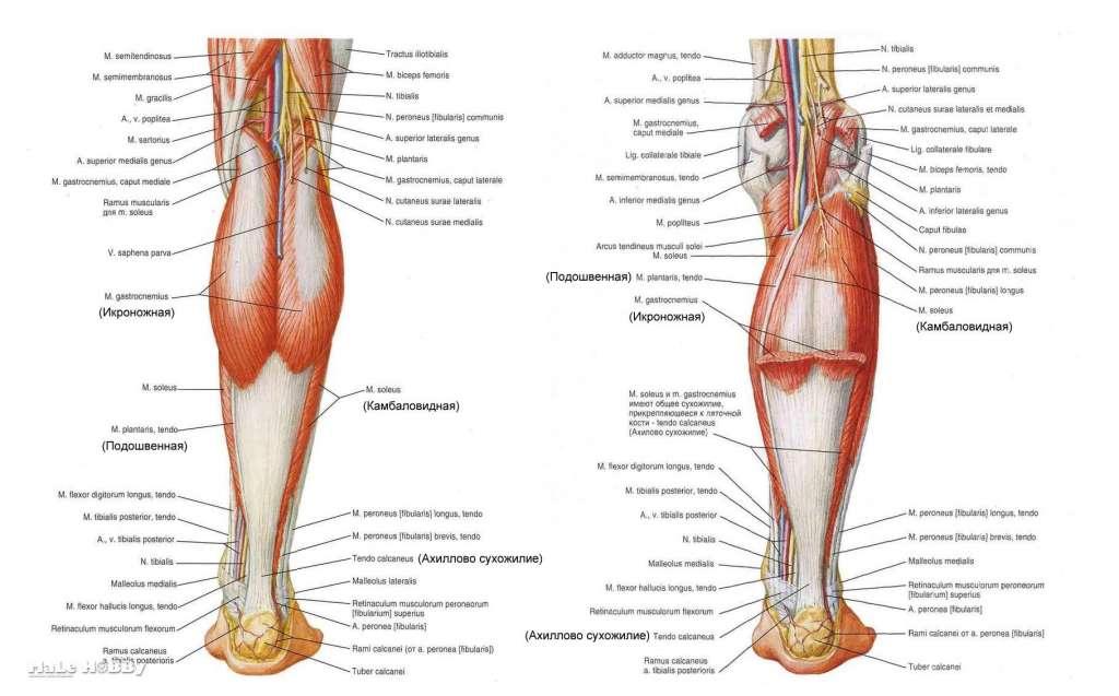 Что есть чтобы накачать мышцы в домашних условиях