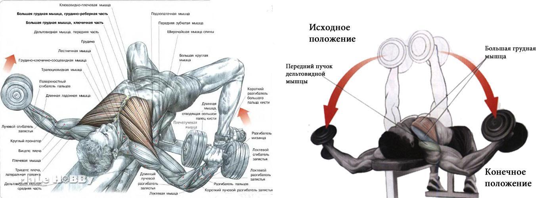 Как накачать грудные мышцы в домашних условиях для мужчин