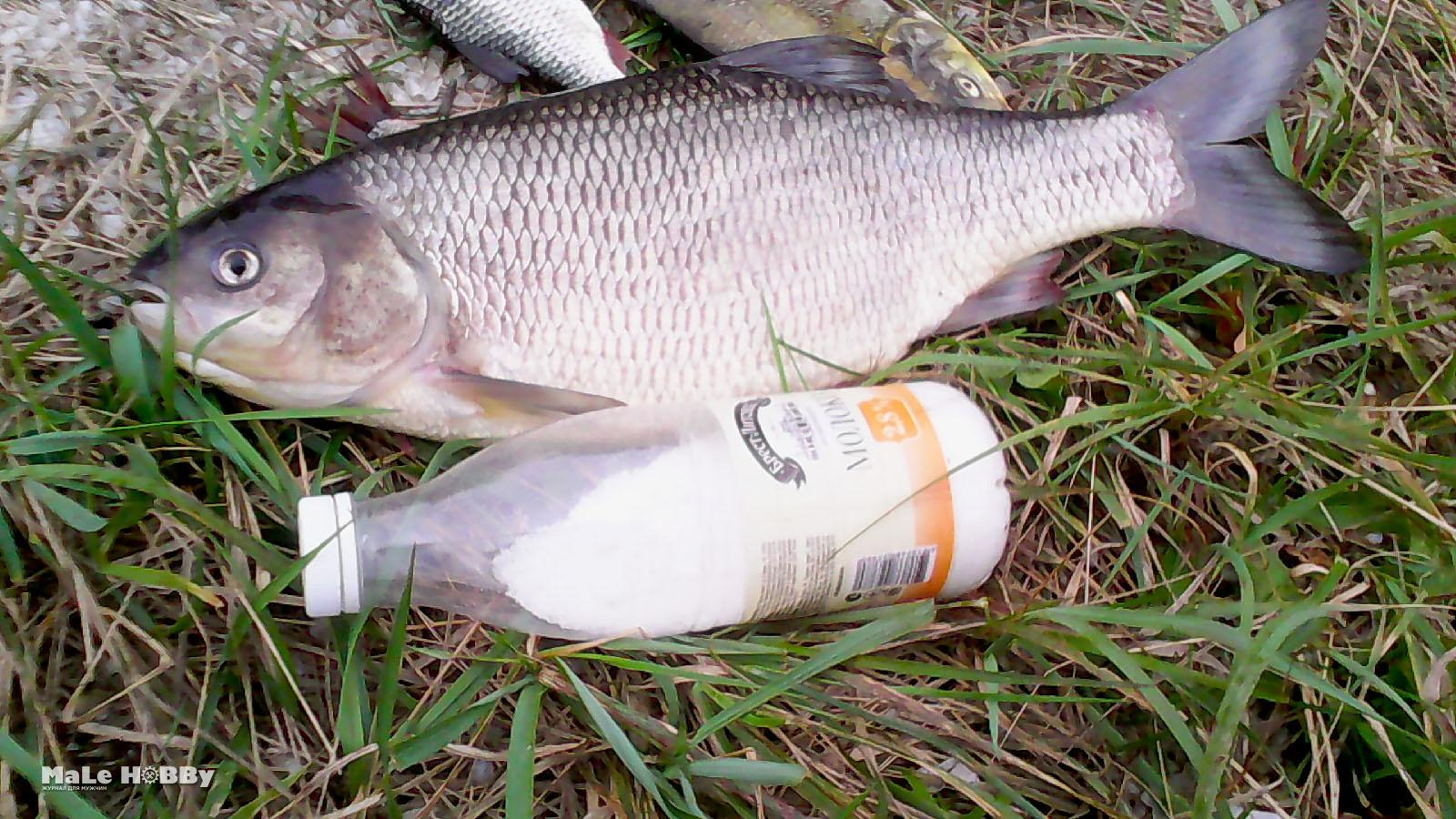 прогноз клёва рыбы в армавире