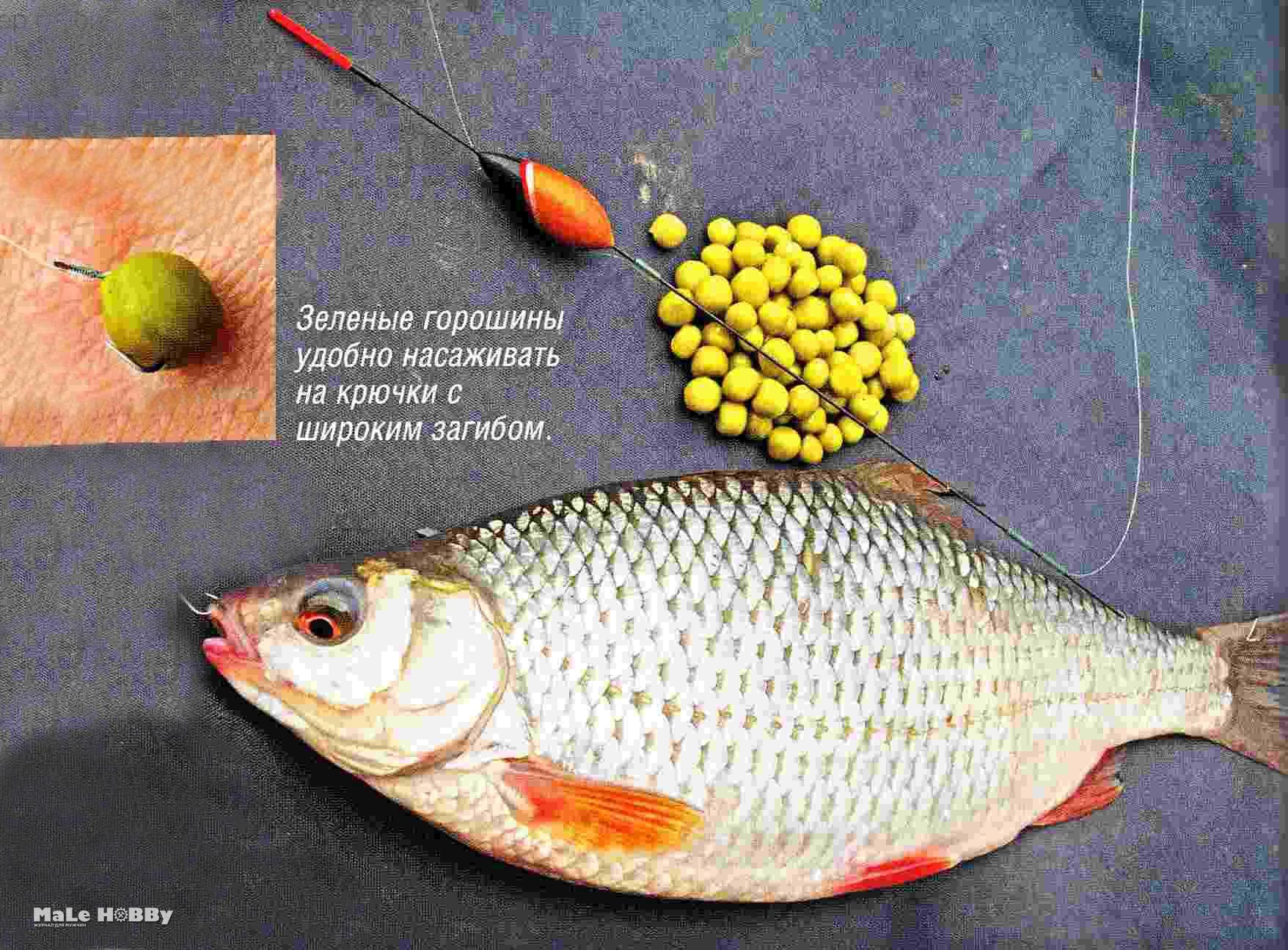 Ловля плотвы - наживки и снасть: 28 советов для рыбаков 34