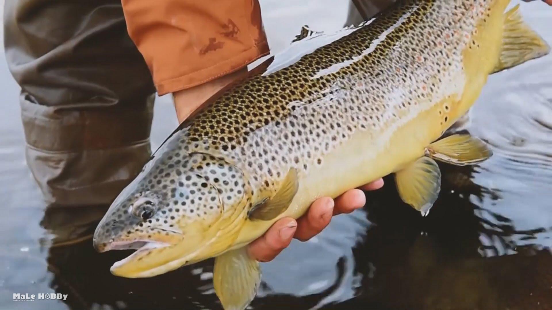 платная рыбалка в подмосковье лосось