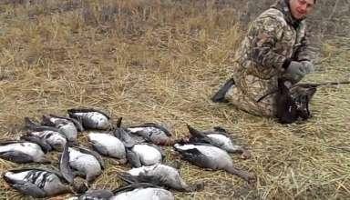 Охота на гуся в Аркалыке 2017 года