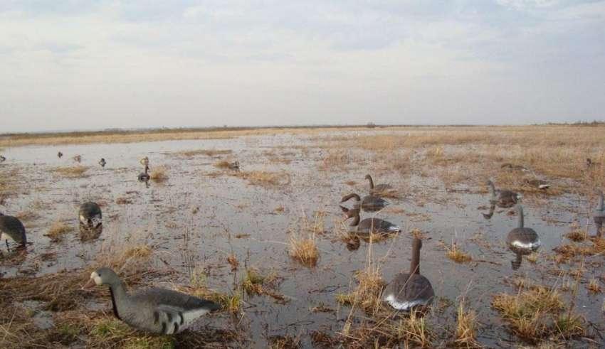 Охота на гуся в Рязани и Рязанской области 2017