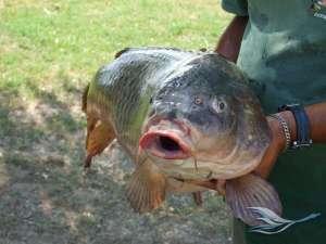 Рыбалка в дельте Дуная Румынии и Украины