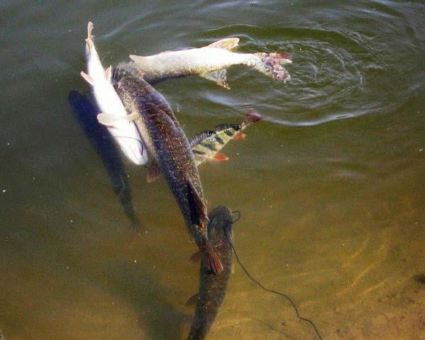 Рыбалка в Еганово 2015
