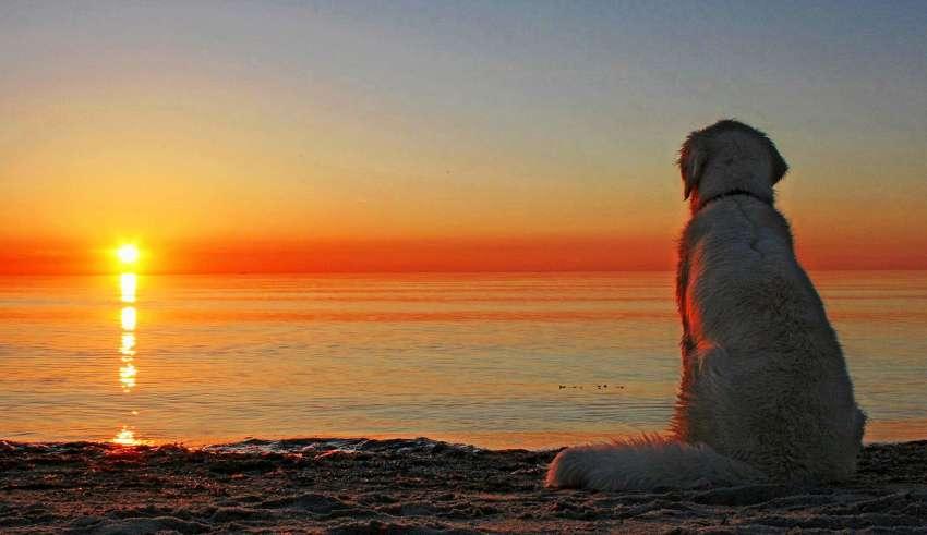 Где можно провести отдых в Сочи с собакой в 2016 году