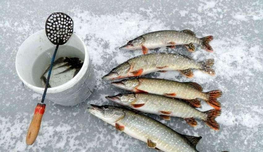 Зимняя рыбалка в Карелии 2015-2016