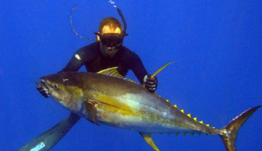 Подводная охота на Гоа 2016