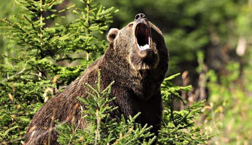 Охота на медведя 2016