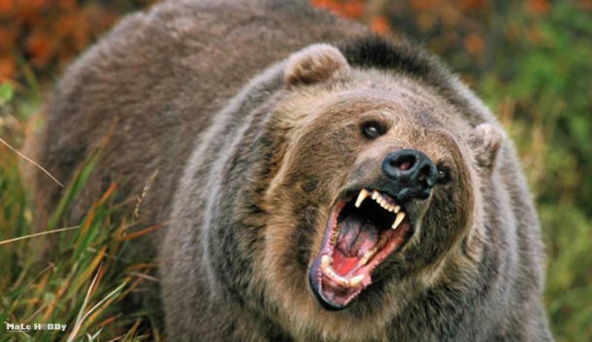 Сроки осенней охоты 2015