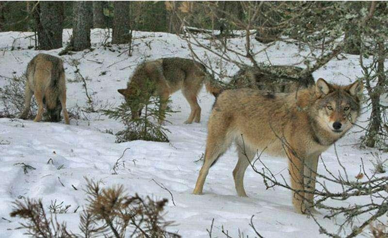 Охота в Иркутской области 2015