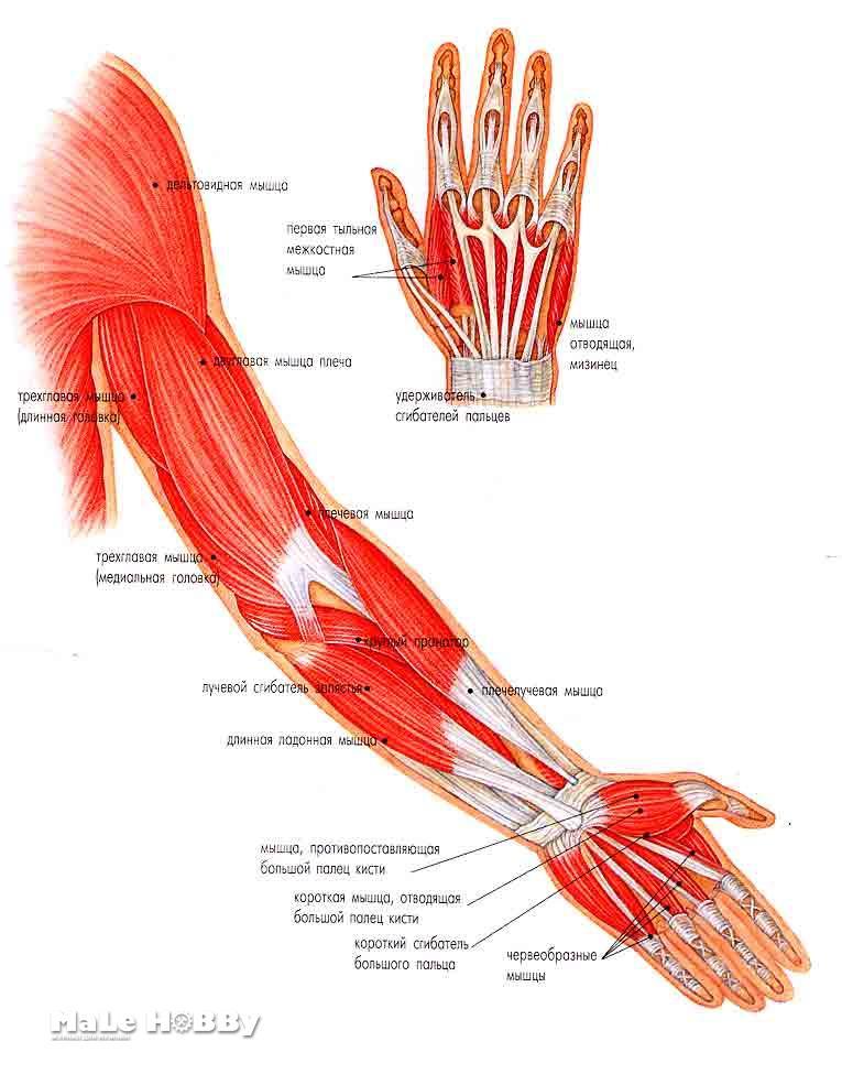Лечение мышцы рук в домашних условиях