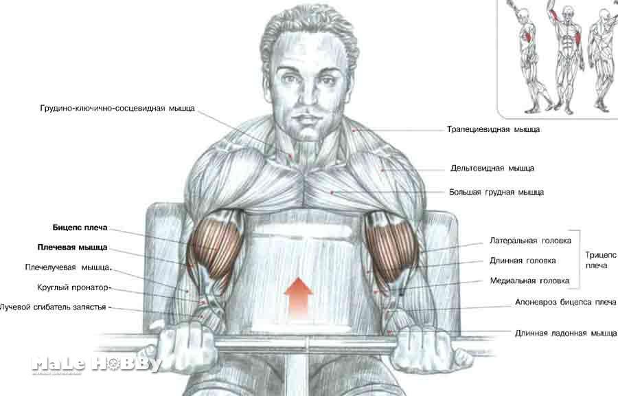 Лечение мышцы рук в домашних условиях 11
