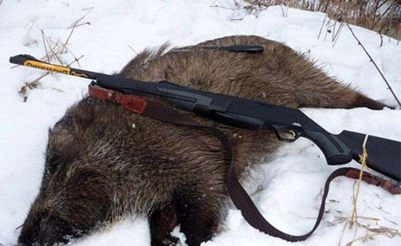 Охота на кабана зимой 2015-2016