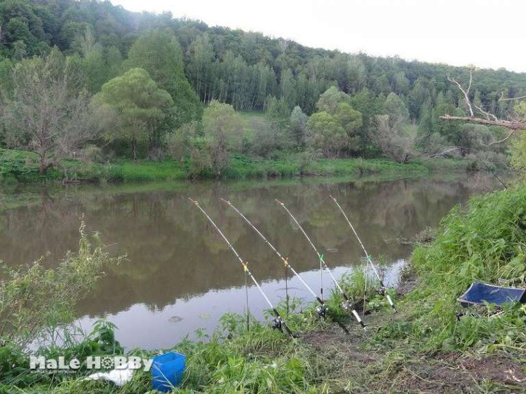 Рыбалка в тульской области на дону