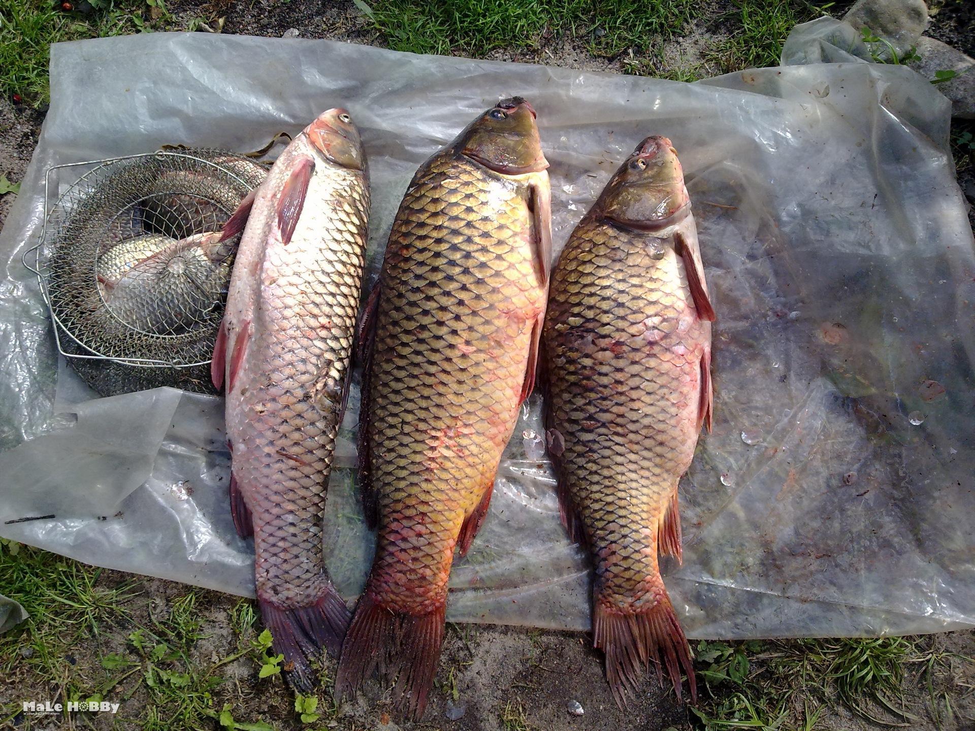 Рыбалка в брянске фото 662-366