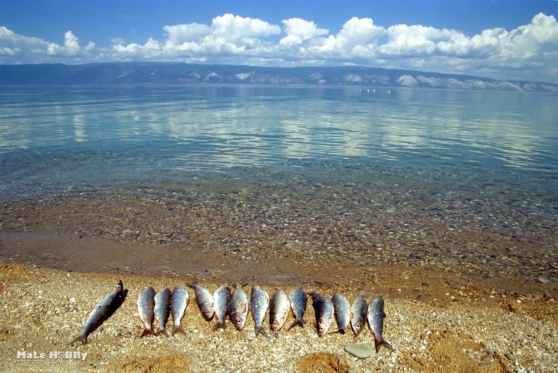 как ловить рыбу в плохую погоду