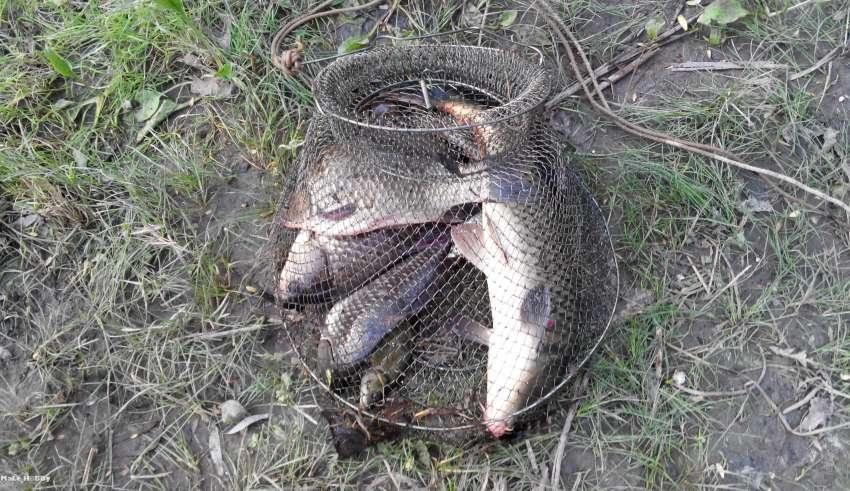 Рыбалка в пойме волго-ахтубинской