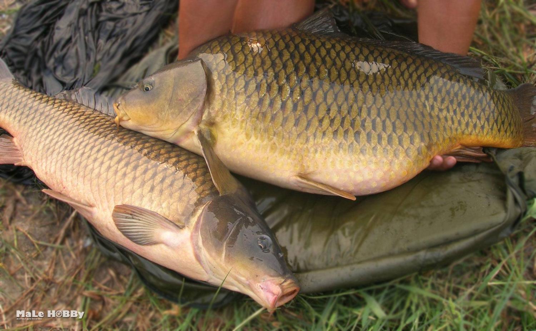 рыбалка в воронеже бесплатные пруды