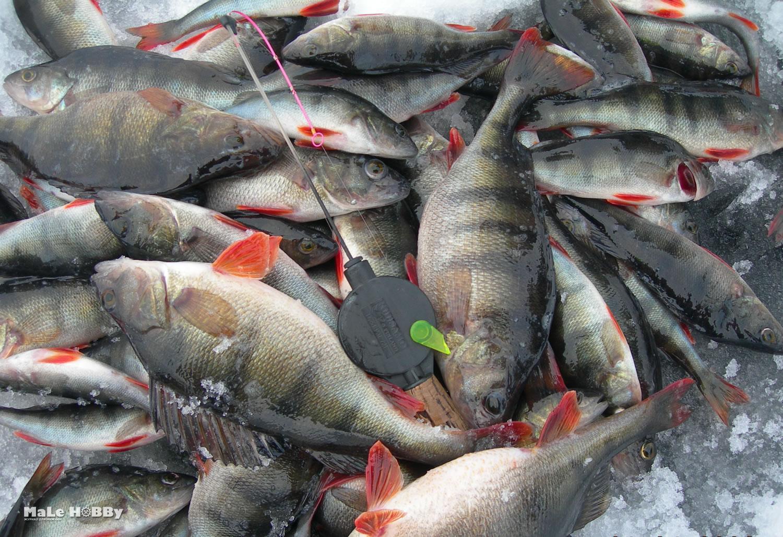 клев рыбы сегодня пятигорск