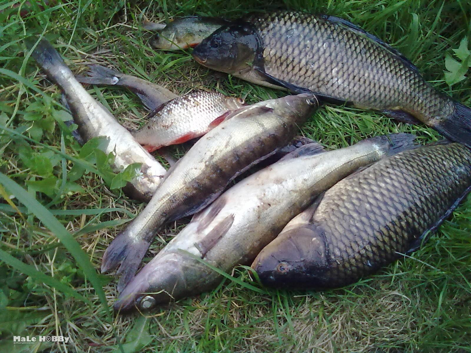 рыбхоз шатурский рыбалка 3