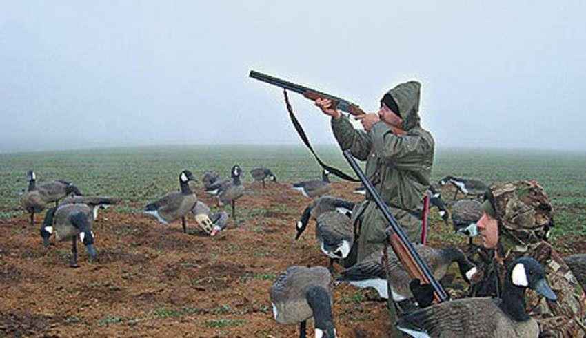 Охота на гусей для новичков, начинающих