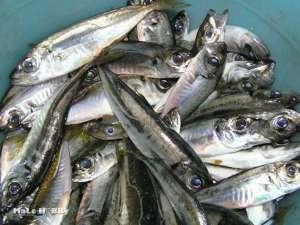 на что клюет рыба в анапе