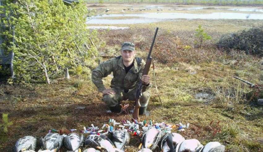Охота на гуся в Архангельске и Архангельской области 2017