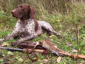 Ответственность за охоту без путевки 2017