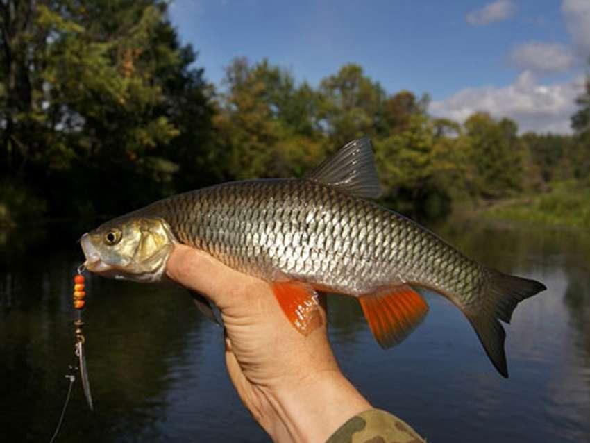 ловля рыбы на реках ярославской области