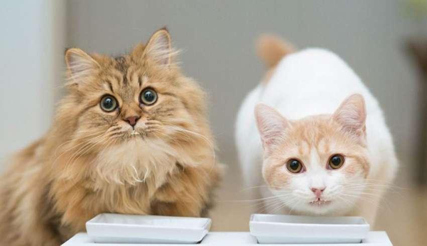 Рейтинг кормов для кошек 2018